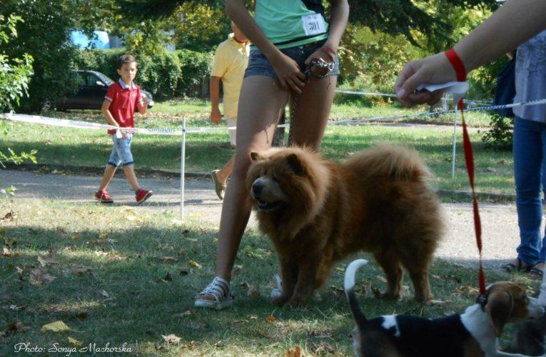 Разрешиха и на деца в парковете, освен на кучета