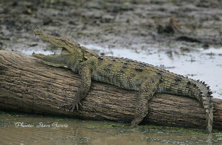 Приказка за дървото и крокодила