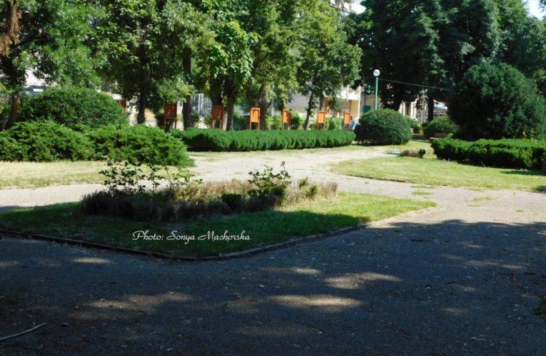 Чемширен молец отново напада парка