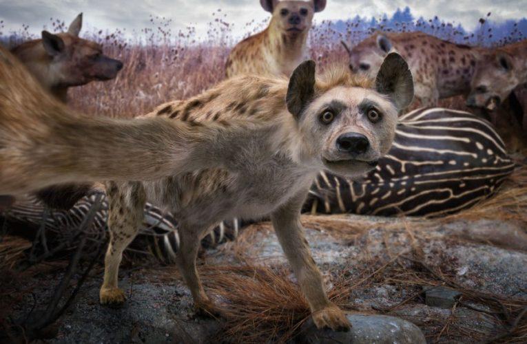 Непознат хищник с два реда зъби е убит в Румъния