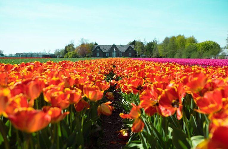 Нидерландия въведе карантина за българи