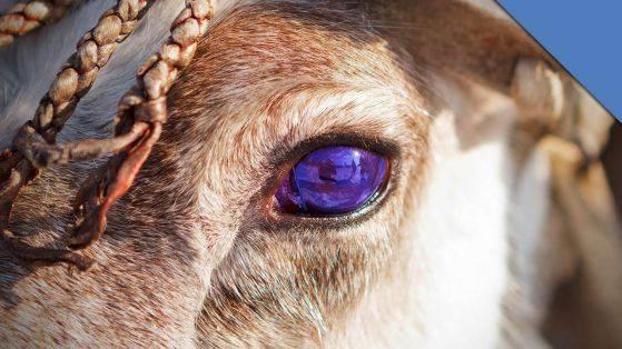 "Коледа и ""новите"" очи на елените"