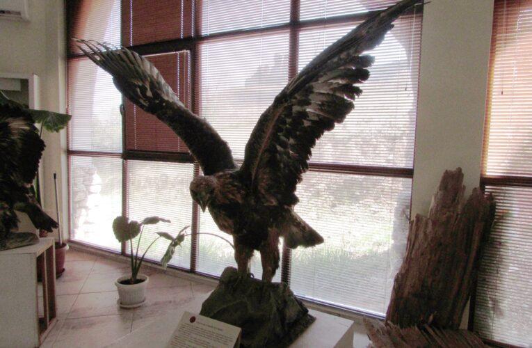 Белоградчик и Международният ден на птиците