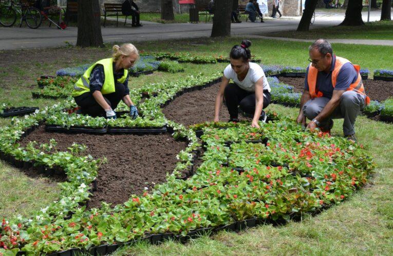 Засадиха 17 000 цветя във Видин