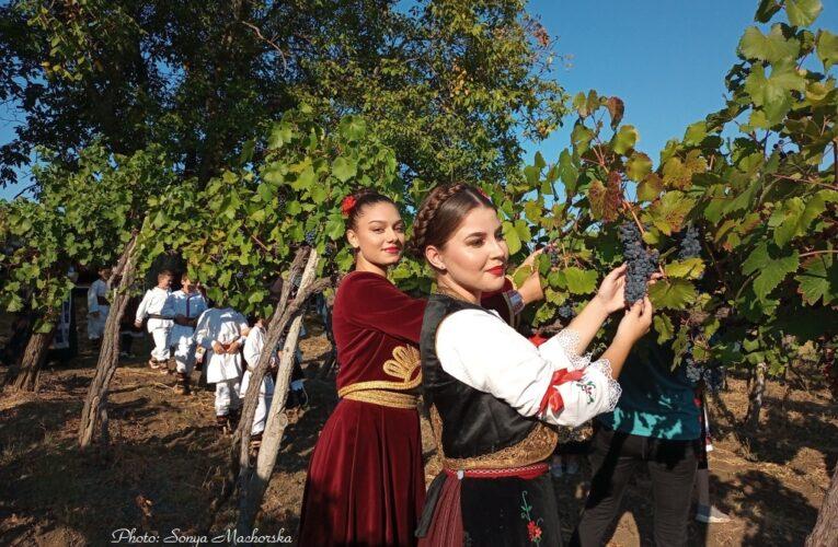Начало на гроздобера в Роглевачке пивнице, Сърбия