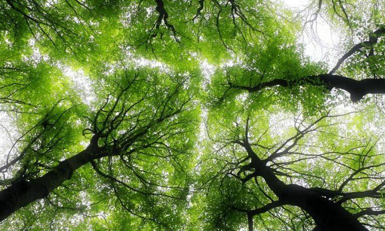 Дронове садят гори в Хърватия